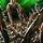 05 - Undergrowth