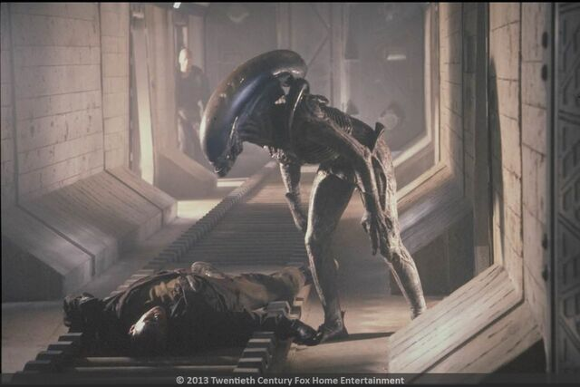 File:Alien 3 2013 XenoFox.jpg