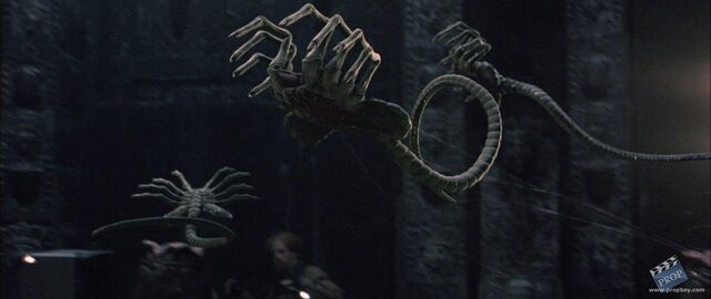 File:Avp facehugger.jpg