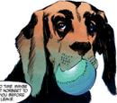 Mac (dog)