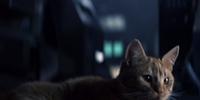 Jones (cat)