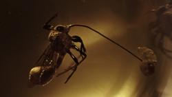 Parasitic alien wasp
