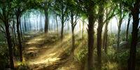 Solorian Woods