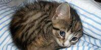 The New Baby Kitten