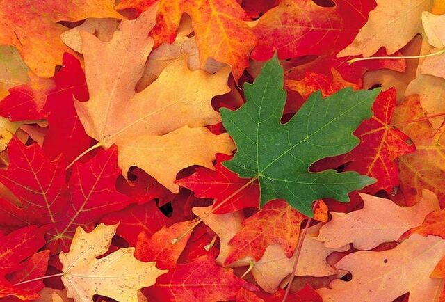 File:Fall-leaves-colorful-green.jpg