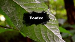 Foofee