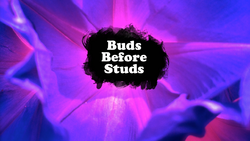 Buds Before Studs