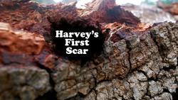 Harvey's First Scar