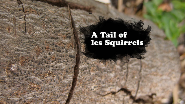 File:A Tail of Les Squirrels.png
