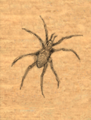 Black Spider Figurine item artwork BG2.png