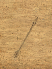 File:Arrow of Fire.png