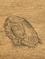 Ankheg shell.png