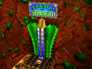 CactusO'StrengthBT