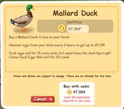 Mallard Duck Duck