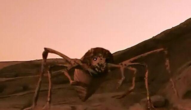 File:Spiderling.jpg