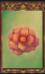 Celestial Flower (Origins)