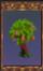 Sedna Peach Tree (Origins)