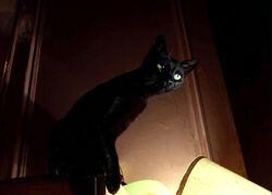 Batman Returns - Miss Kitty