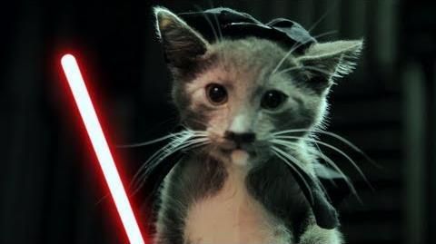 Jedi Kittens Strike Back