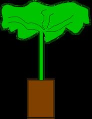 Tree Body