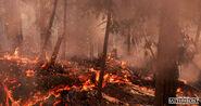 SW Battlefront (Endor) screenshot -6
