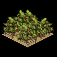 Orchard rambutan icon