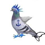 File:Aqua pigeon.jpg