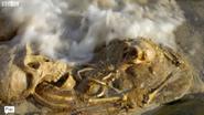 Proto-Human Remains