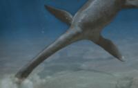 File:Kimmerosaurus.jpg