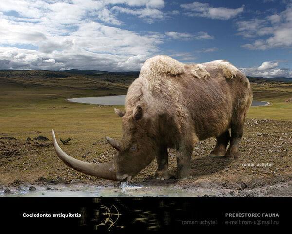 File:Woolly Rhinoceras.jpg