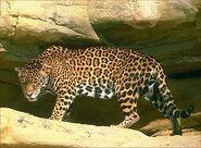 Jaguar cave 420