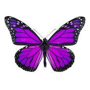 Small-purple-butterfly