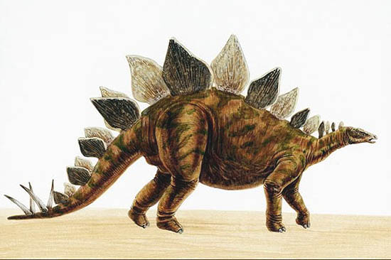 File:Stegosaurus2.jpg