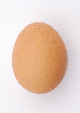 File:Chicken egg 2009-06-04.jpg
