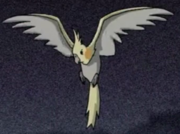 Normal cockatiel.png