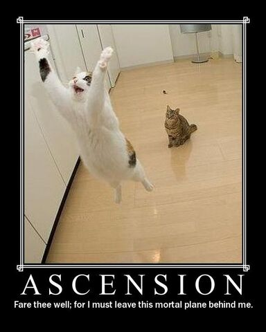 File:Funny cat pictures 115.jpg