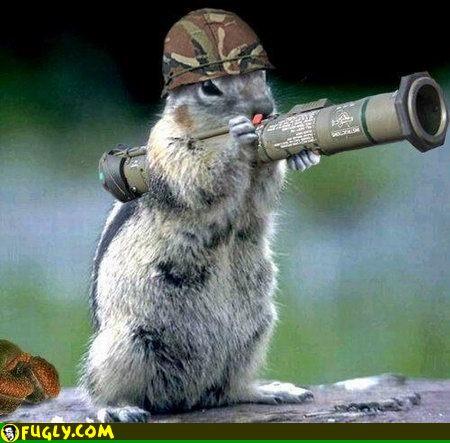 File:Army squirrel.jpg