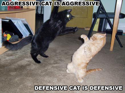 File:Funny cat pictures 002.jpg