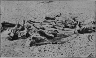 800px-v-m- doroshevich-east and war-british india- corpses of famine victims