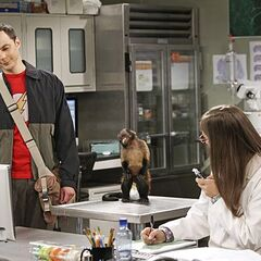 Sheldon and Amy's monkey's dual reaction to a kitten in a teacup.