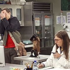 Sheldon and Amy's monkey's dual reaction to watching a baby being born.