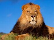 Lion-King-456803