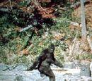 Bigfoot Wiki