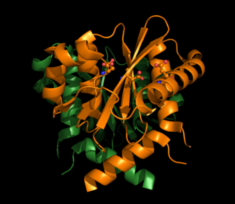 HIV-1 Integrase with Active Sites