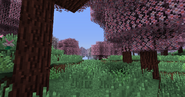 CherryBlossomGrove02