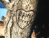 The Return of the Bionic Woman - Heart of Jaime and Steve on a tree