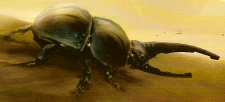 Scarabax Beetle