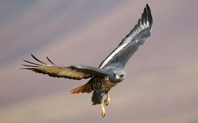 File:Birdsofprey16.jpg