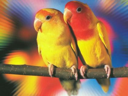 File:Love Birds.jpg
