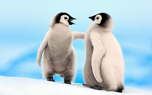 File:Emperor Penguins Snowhill.jpg